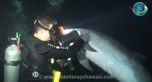 Diver helps injured dolphin