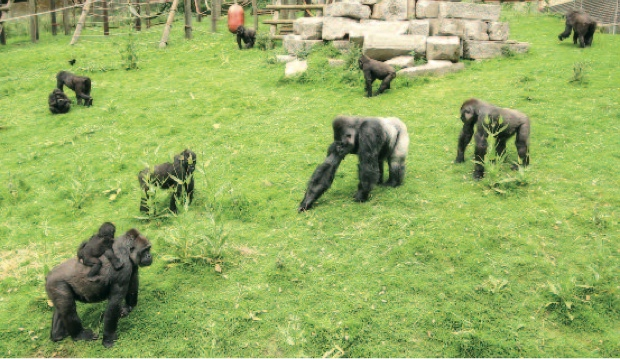 Djala and his family at Port Lympne
