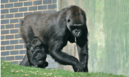 Djemba is the youngest member in Djala's family born to mother Mumba
