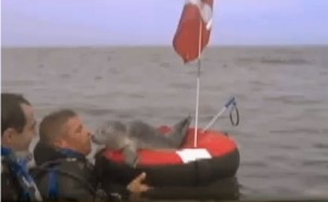 Mark Hodgdon saves a seal