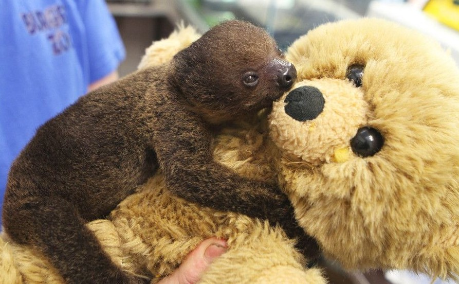 Teddy Bear becomes Friend in Need for Baby Sloth : The World We Share
