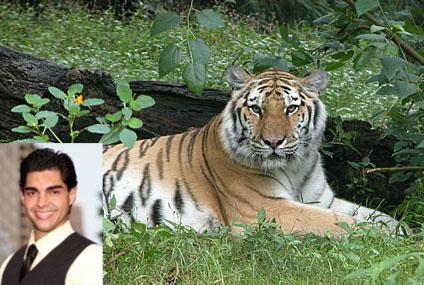David Villalobos jumed into Tiger