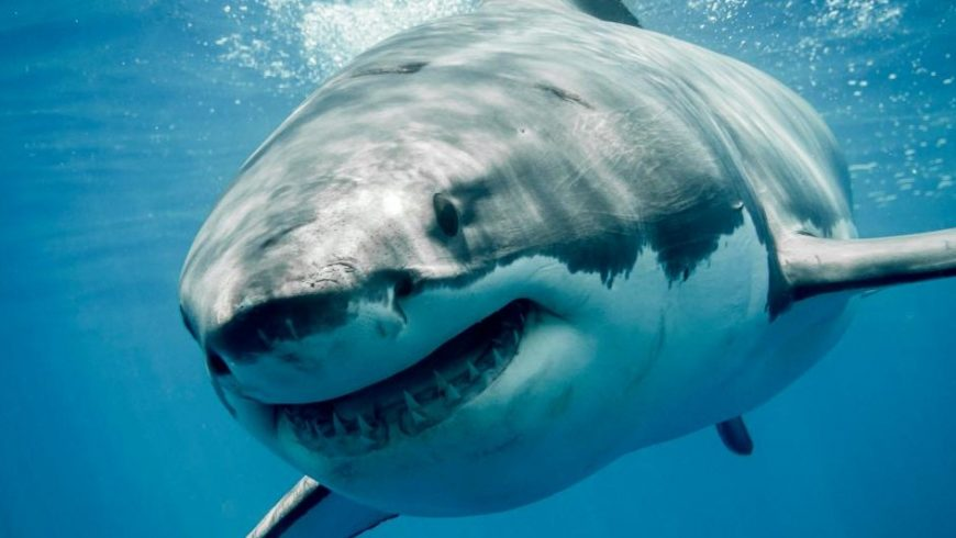3000 Sharks Caught in Illegal Nets off Texas Coast