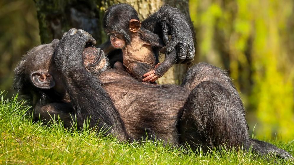 Monkeys Play Peek-a-Boo!