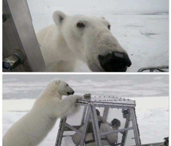 Wildlife Cameraman Films Frightening Footage as Polar Bear Attacks His Safety Pod