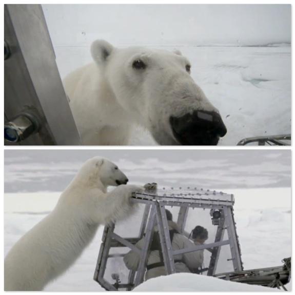 Wildlife Cameraman Films Frightening Footage as Polar Bear Attacks His Safety Pod
